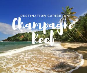 champange-reef