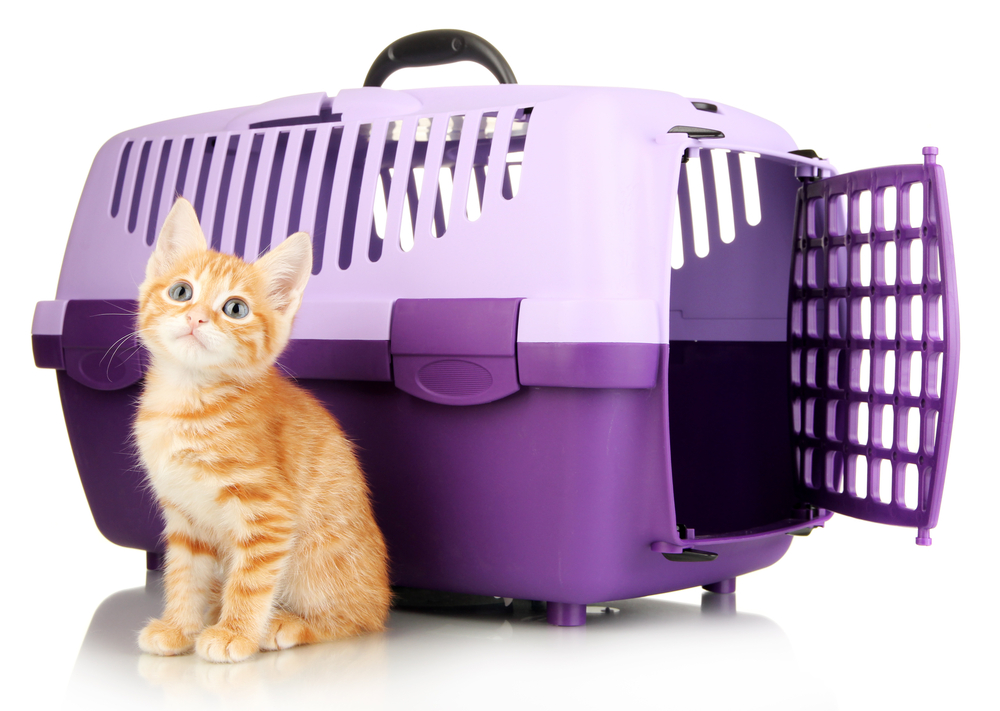 'cat with carrier'