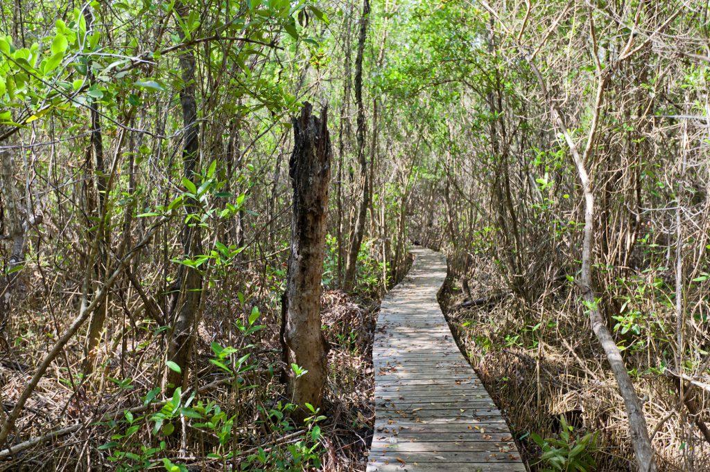 mastic-trail
