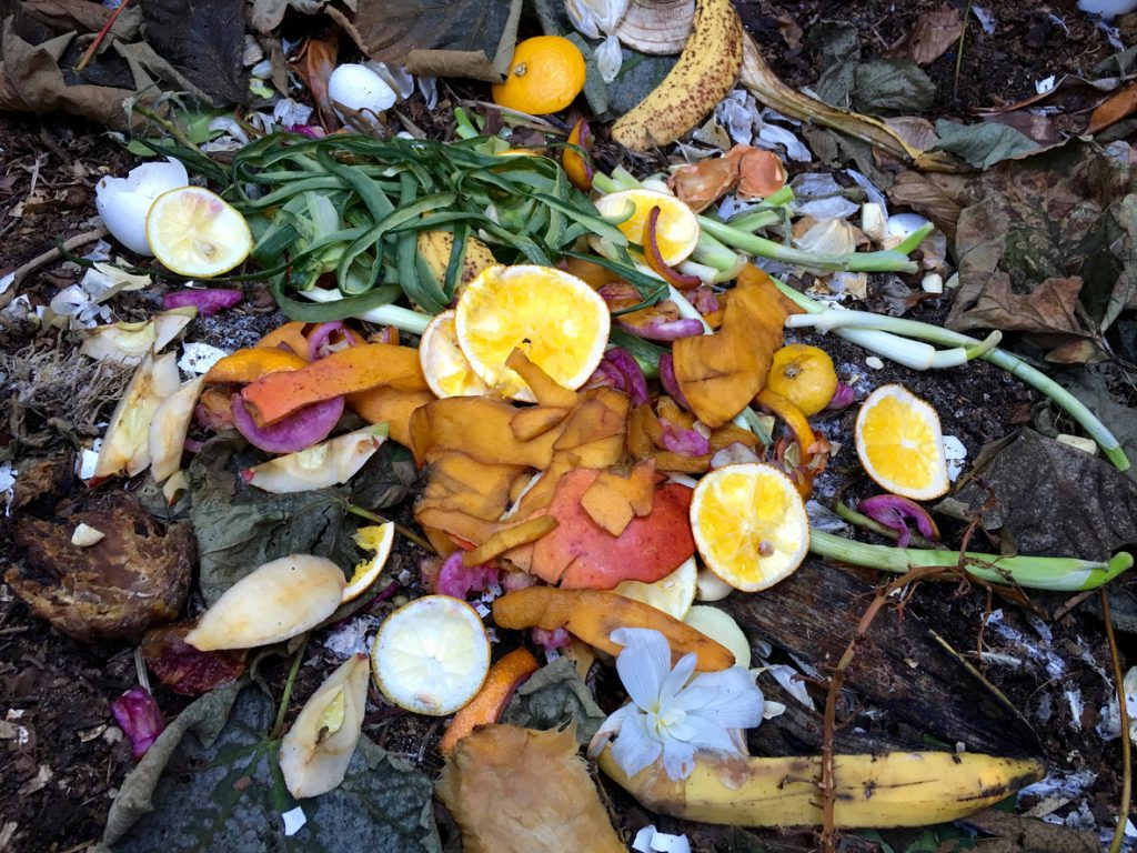 Fresh bio waste and compost with orange peels