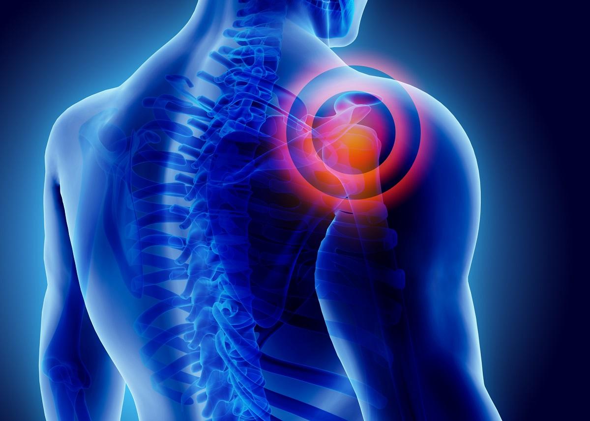 Illustration of shoulder joint.