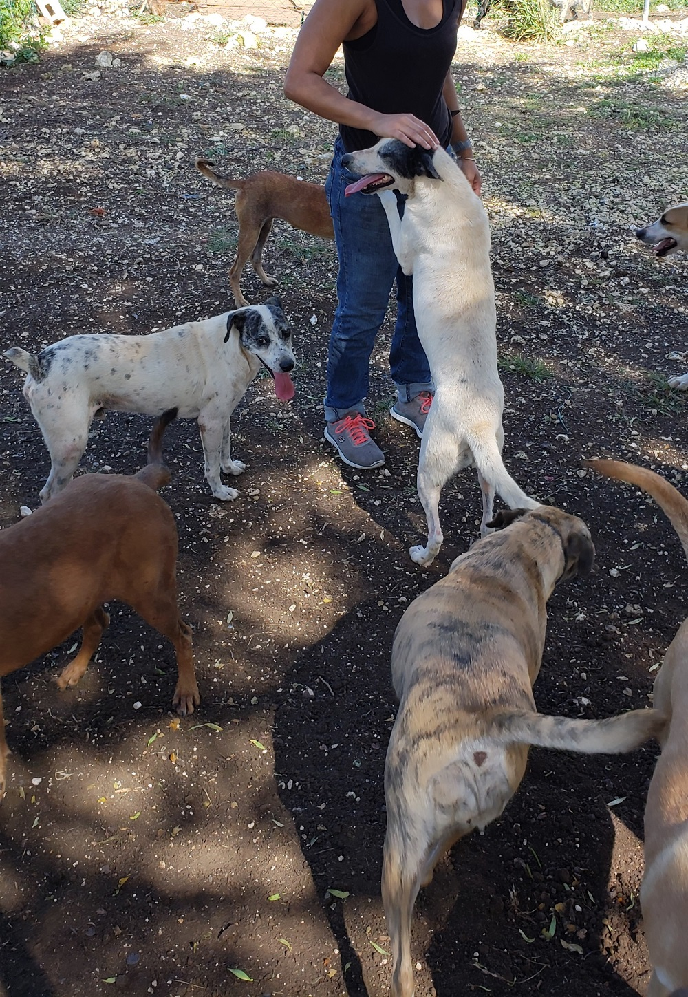 Young woman surrounded by happy dogs at Hiking with Hooligans tour