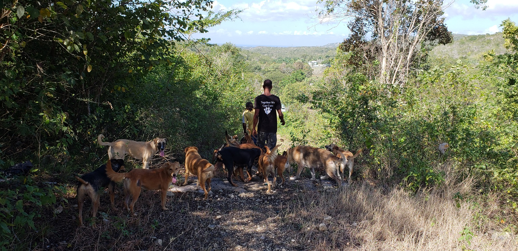Several dogs on hiking trail with people at Hiking with the Hooligans tour.