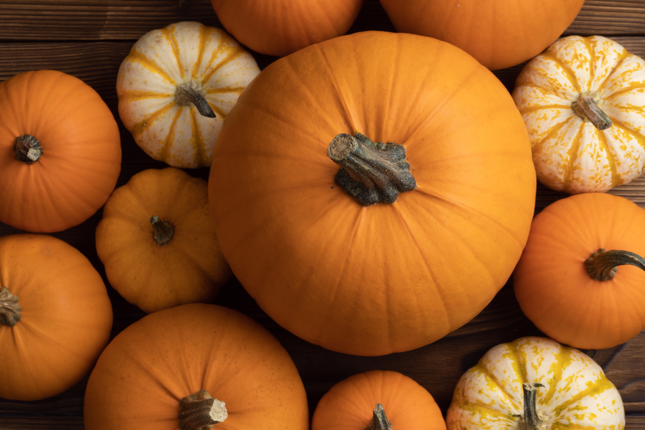 """pumpkin season in Guernsey"""